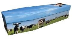 3827 - Cows